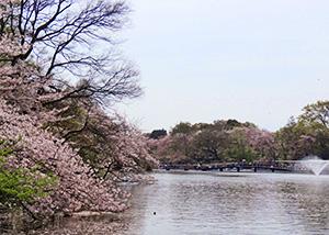 井の頭池(七井橋)