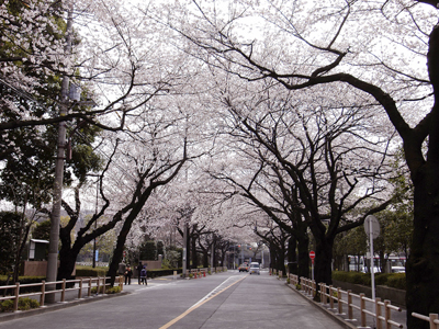 cherry_road_ph01